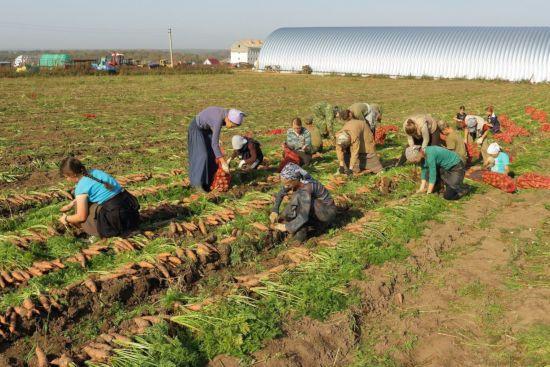 Люди работают в поле