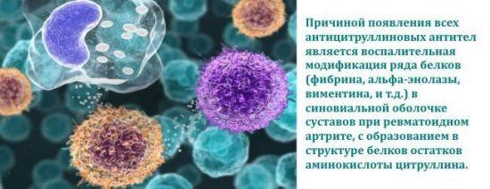 Клетки под микроскопом