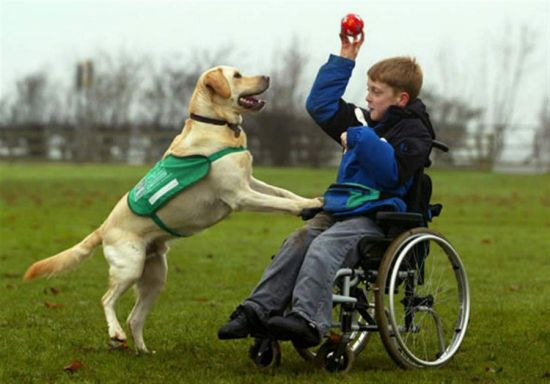 Игра ребенка с ДЦП с собакой