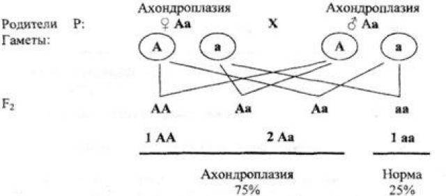 Наследование ахондроплазии