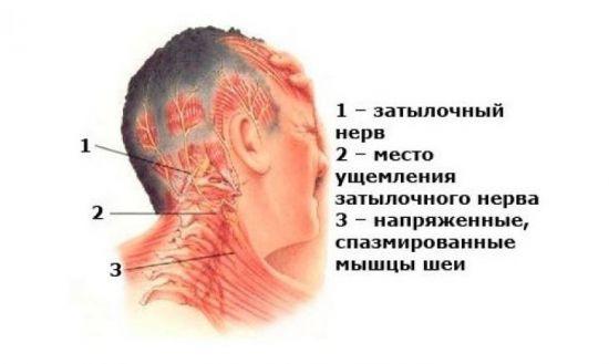 Нервы шейного отдела