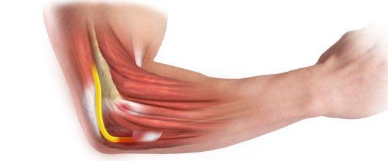 Сухожилия и мышцы руки