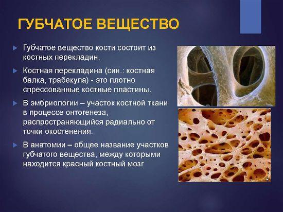Информация о губчатом веществе