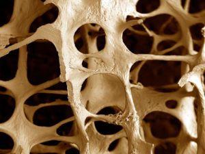 Костная ткань под микроскопом